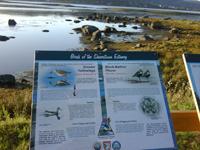 Birds of the Shearstown Estuary