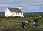 Berry Picking, Broad Cove, Conception Bay. Photo: Lloyd C. Rees.